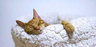 Covid-19 : un impact sur le sommeil et le stress ?