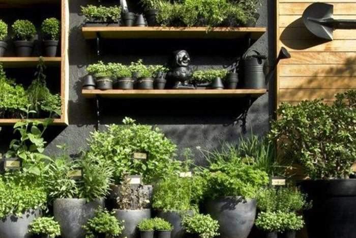 Entretien jardin suspendu