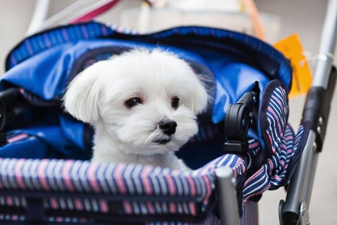 Comment bien choisir sa poussette pour chien ?