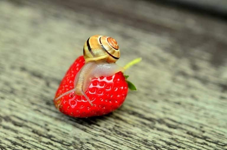 Nourriture pour escargots d'élevage : tout ce qu'il faut savoir