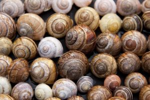 Héliciculture : Le guide détaillé de l'élevage d'escargots